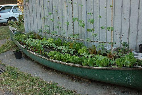 Canoe cu plante