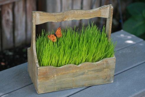 Cutie de lemn cu iarba