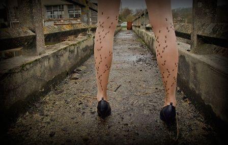 ciorapi cu furnici